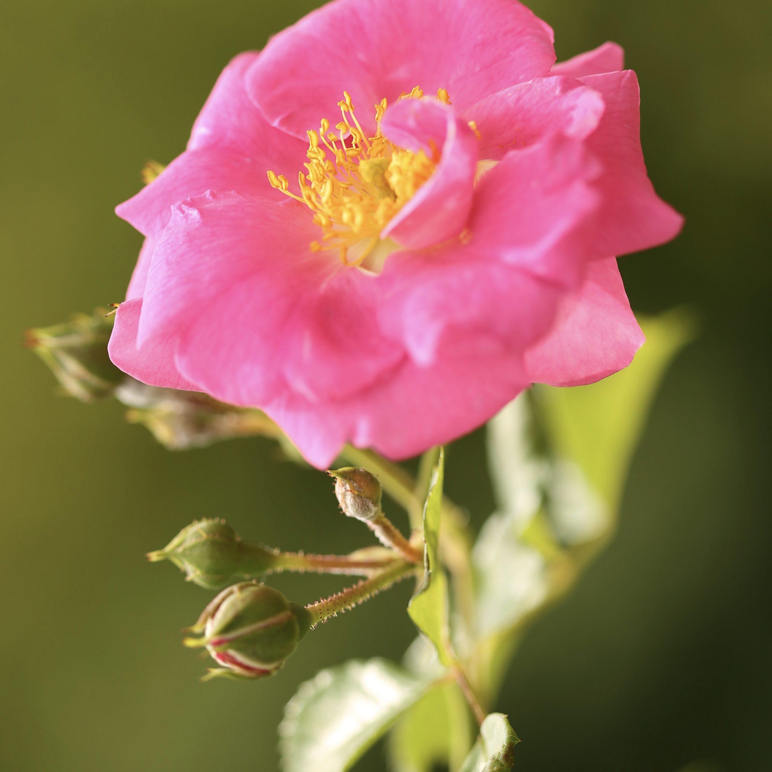 rosengarten beutig